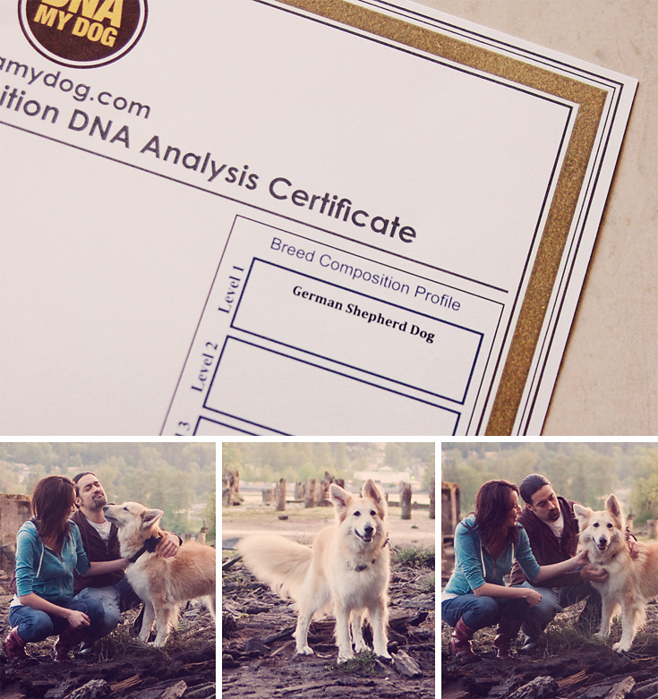 DNA My Dog results